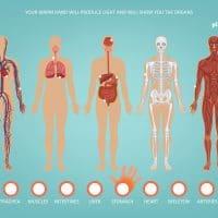 Smile Kinetic Map Körper